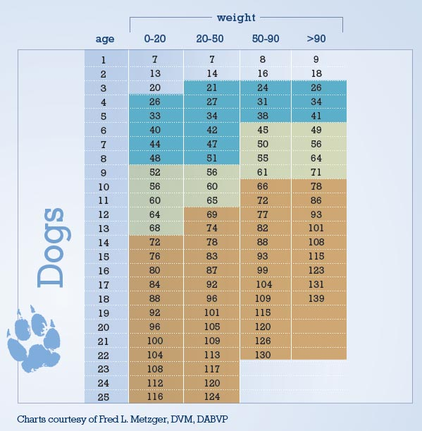 Age Chart Dogs
